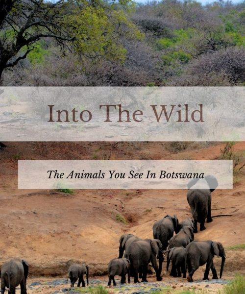 Botswana: Exciting Wildlife You Will See